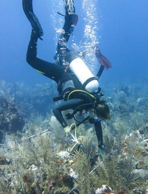 Underwater surveys, Belize