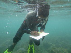 Snorkel surveys