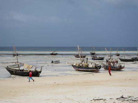 Dau, traditional Zanzibari fishing boats, stranded on the beach during low tide