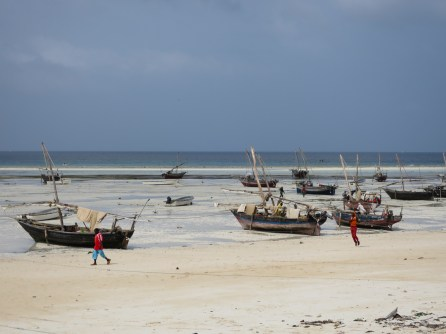 Dau, traditional Zanzibari fishing boats, stranded on the beach during low tide