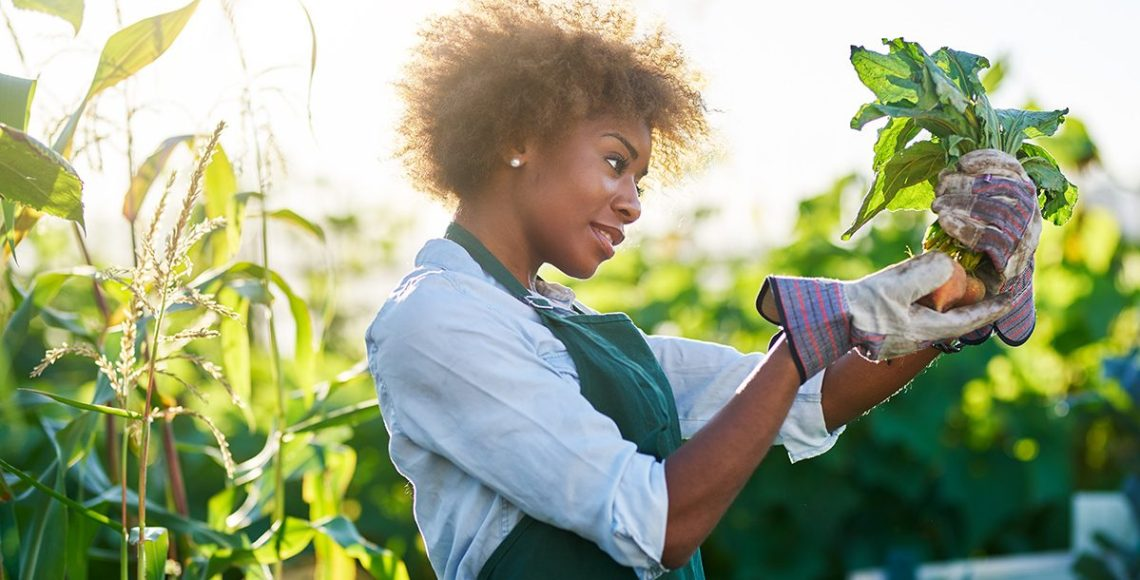 Best Crops To Grow In Virginia And South Carolina Bon Secours Blog