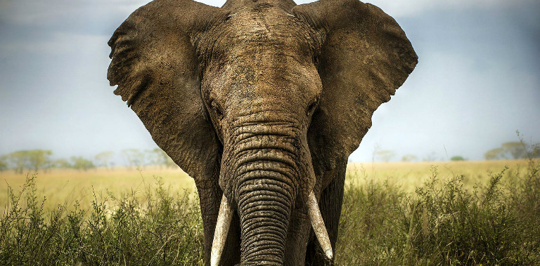 big-five-south-africa-elephant-manyeleti
