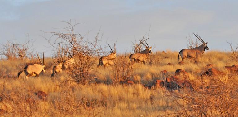 cropped-2-wallpaper-oryx2