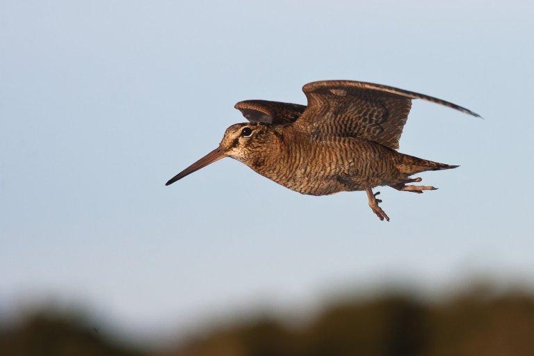 byh-woodcock
