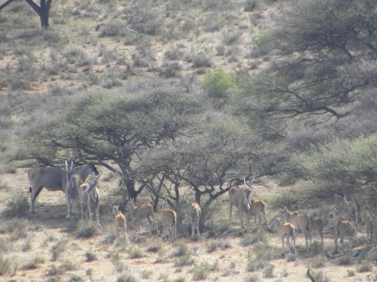 jr eland 7 cropped