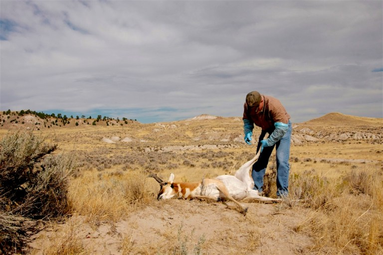 How to field-dress a pronghorn antelope