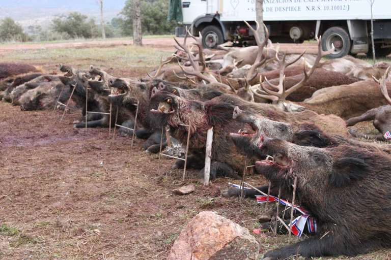 Trophy layout after a Monteria hunt