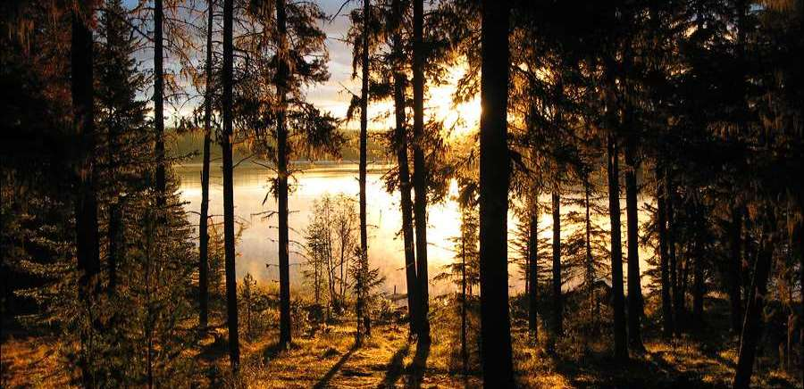 A sunrise on a forest lake