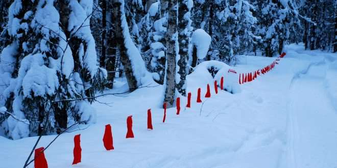 A line of red flags used for Russian wolf hunting