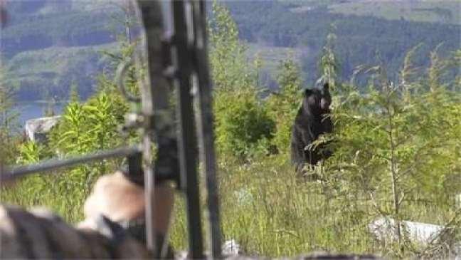 a bow shot at a bear
