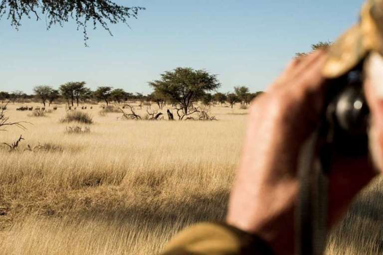 Glassing for game on an African plain.