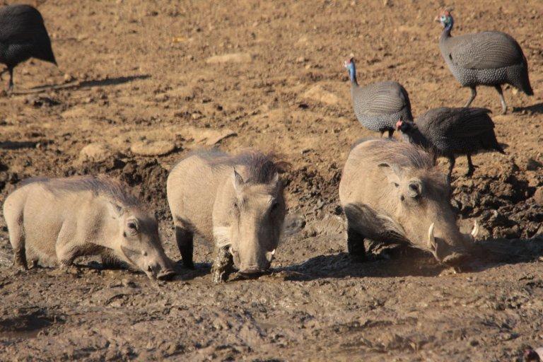 06_botswana_mud_trap