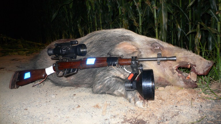 A bushpig trophy with a nigh-scope equipped rifle