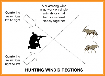 A quartering wind may work on single animals or small herds clustered closely together