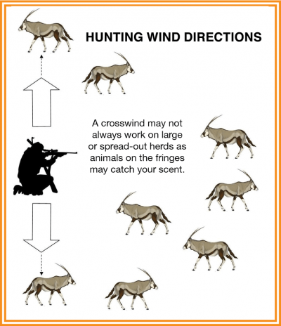 A crosswind may not always work on large or spread-out herds as animals on the fringes may catch your scent