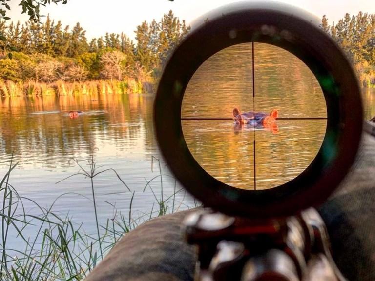 A hippo in a scope
