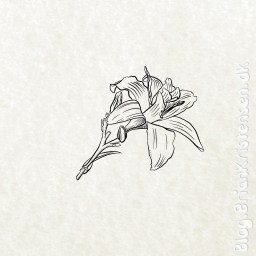 Sketch 0255