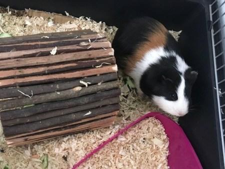 diana_eva's pet, Nina
