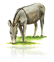 Donkey's Cross custom art from Bronner's Christmas Wonderland