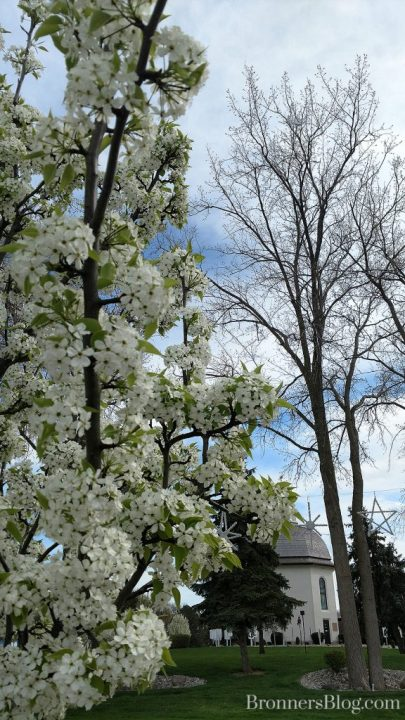 Spring blossoms in the trees near the Silent Night Memorial Chapel in Frankenmuth, MI