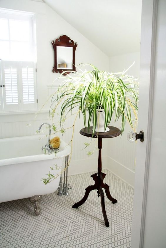 Modern Plant in Bathroom