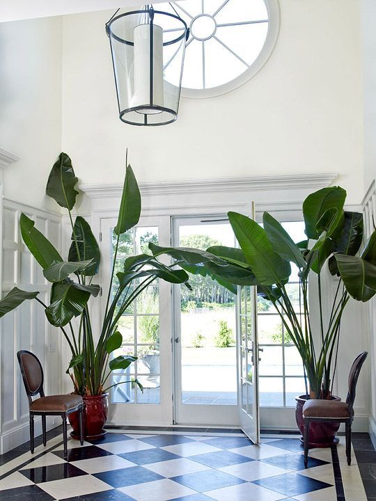 Jungle Entryway