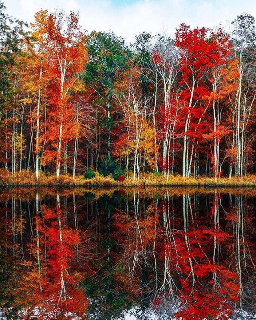 Fall Reflections | Veranda Mag