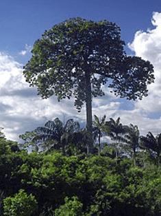 Catanheira ou Castanheira do Pará, amendoeira-da-américa, castanha, castanha-do-brasil, castanha-do-maranhão, castanha-do-pará, castanha-verdadeira, castanheira-rosa, castanheiro, noz-do-brasil, castanha-da-amazônia, castanha-do-acre, noz amazônica, noz boliviana, tocari ou tururi.