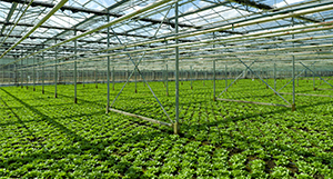 Greenhouse - Organic Foods - Cambro Blog