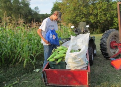 FFA Sweet Corn Field