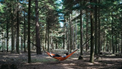 Photo of How to Set Up a Hammock
