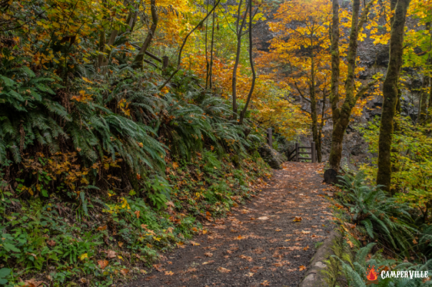 Top 10 Thru Hike in the US - Pacific Northwest Trail In Fall