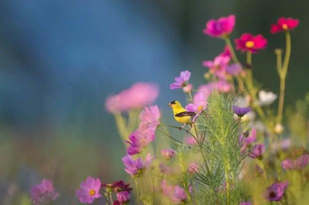 benefits of nature - nature sounds