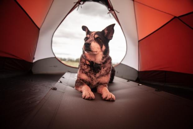 camping etiquette - camping with dogs