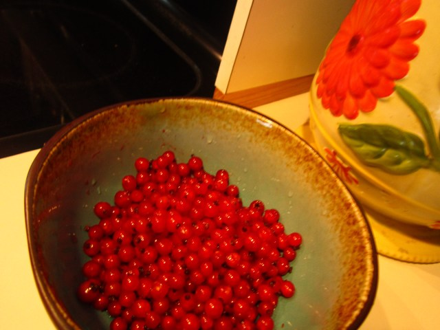 A little tart to eat raw, wild red currants make a great addition to granola or yogurt, or combined with a sweeter berry, such as blackberries or strawberries, in a pie filling.