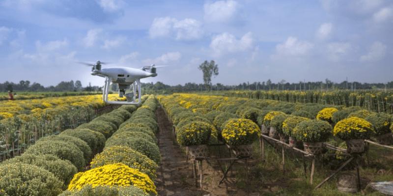 Drone sobrevoando uma lavoura