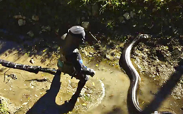 Man vs. Anaconda 2