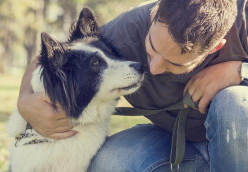 Blog-CarePet-Schmerzen beim Hund