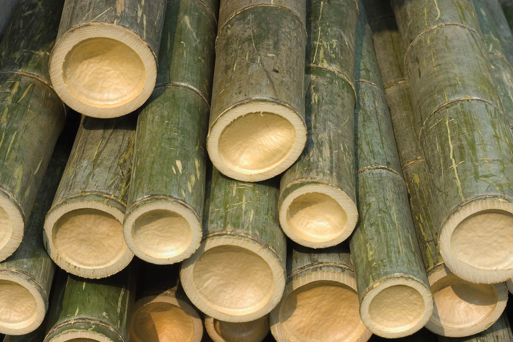 Can Bamboo Really Be Made Into A Soft Eco Friendly Fabric