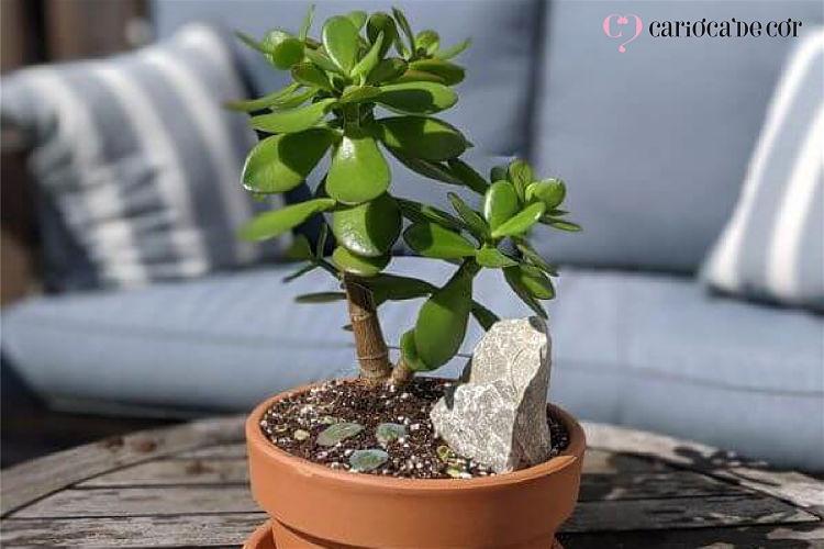 decoração com jade