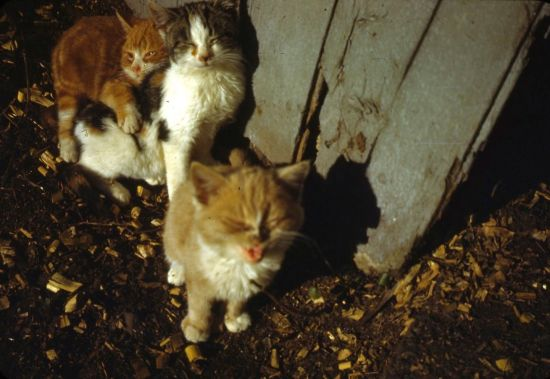 Barn cat and kittens