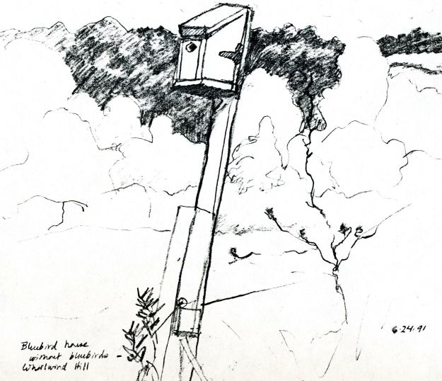 """Bluebird House without Bluebirds - Whirlwind Hill,"" Carol Crump Bryner, pen and ink, 1991"