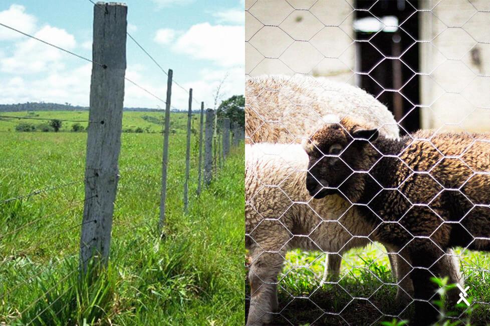 Imagem de comparação entre arames lisos e telas hexagonais mangueirão