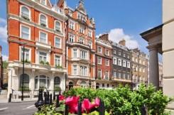 Una strada di Londra e, in primo piano, una siepe con fiori