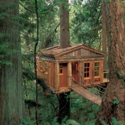 Una casa sull'albero, nel mezzo di una foresta