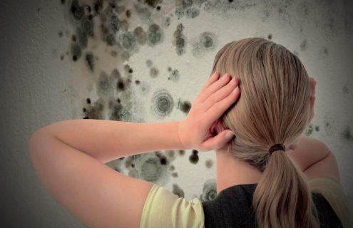 eliminare la muffa dalle pareti: una parete in cui è fiorita la muffa