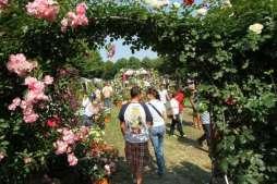 Roseti e giardini da visitare Riso & Rosenel Monferrato