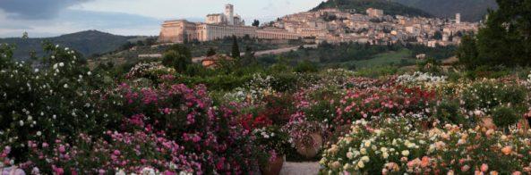 Roseti e giardini da visitare: Assisi, roseto Quando fioriranno le rose