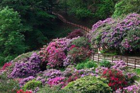 Roseti e giardini da visitare Rododendri Oasi Zegna