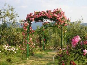 Roseti e giardini da visitare Roseto Carla Fineschi